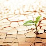 La adaptación como signo de juventud